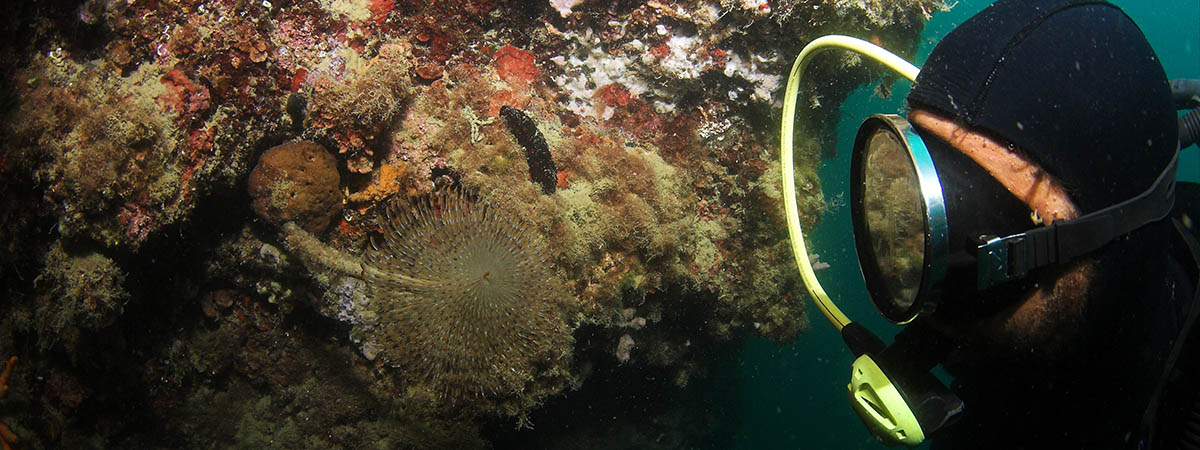 Discovery Diving Starigrad - Paklenica